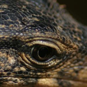 JovialTiger's Profile Picture