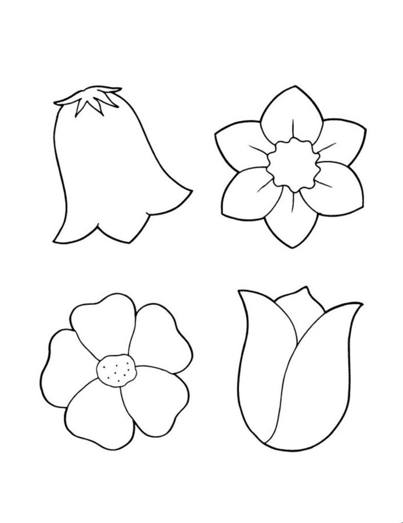 Dogwood Flower Coloring Pages Sketch Coloring Page