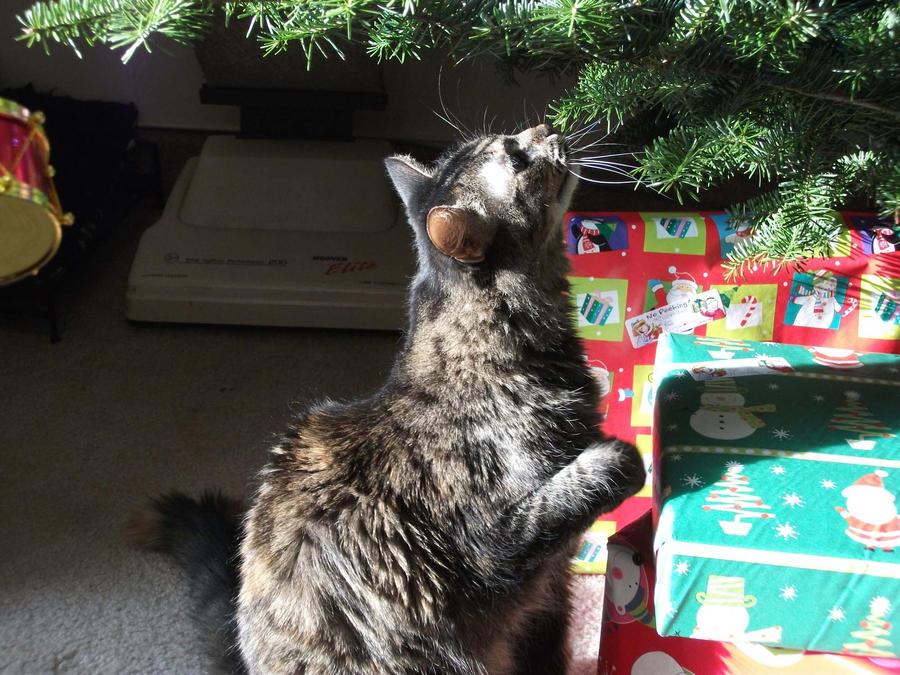 Christmas Examination by Kaleana