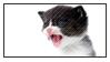 Kitten Addict by adhiwangsa