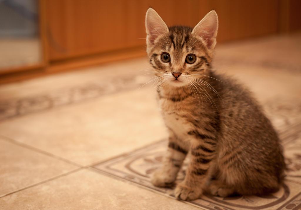 Teeny cat by oTckyku