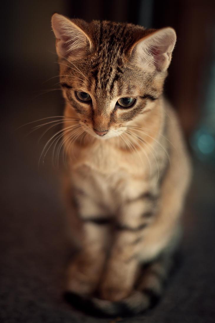 Kitty by oTckyku