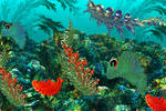 bottom of the Aquaria'a sea