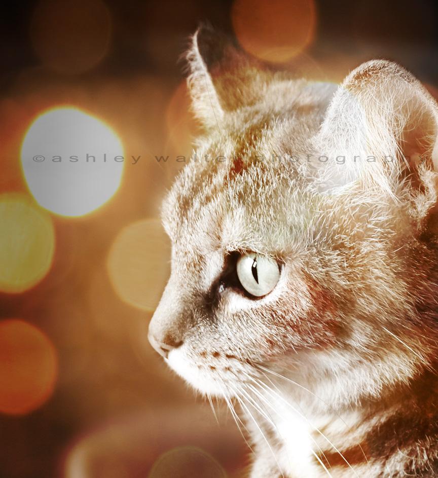 lovely kitty II by xoAshleyLand