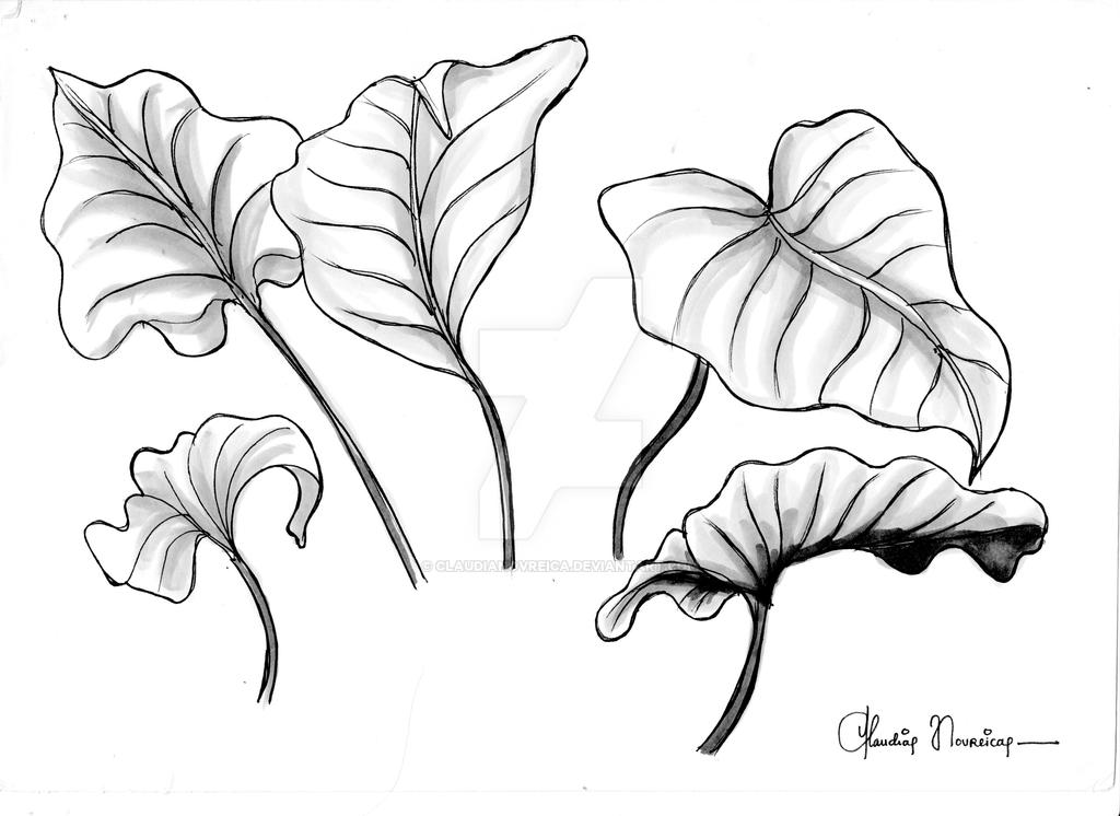 50 Sketches Project Leaves 1 By Claudianovreica On Deviantart