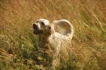 summer memory of my dog