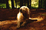 soft forestlight on dogs face