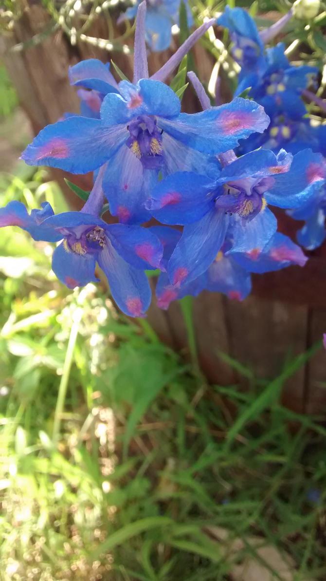 Blue by Caitlynn96