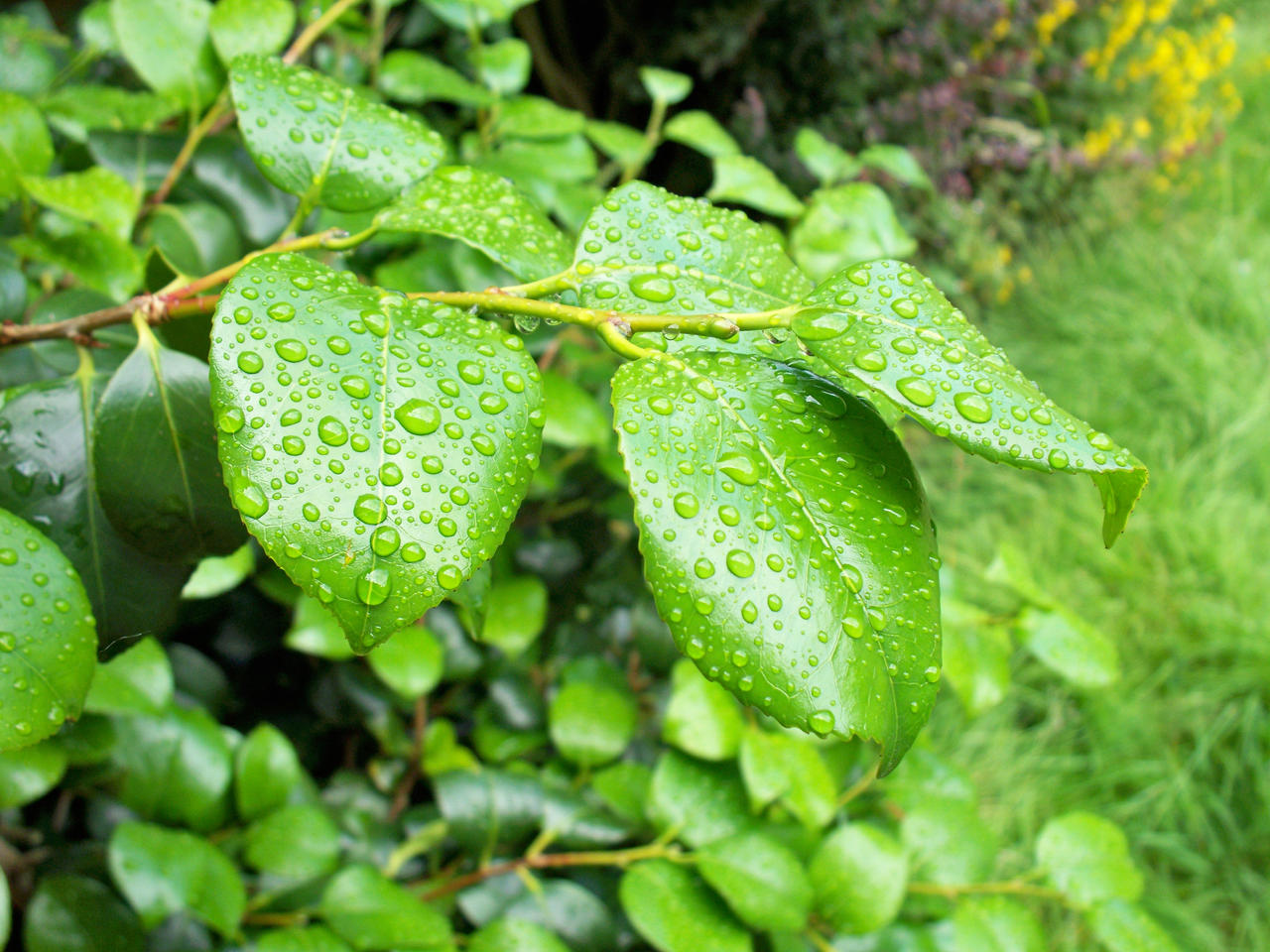 A plants life