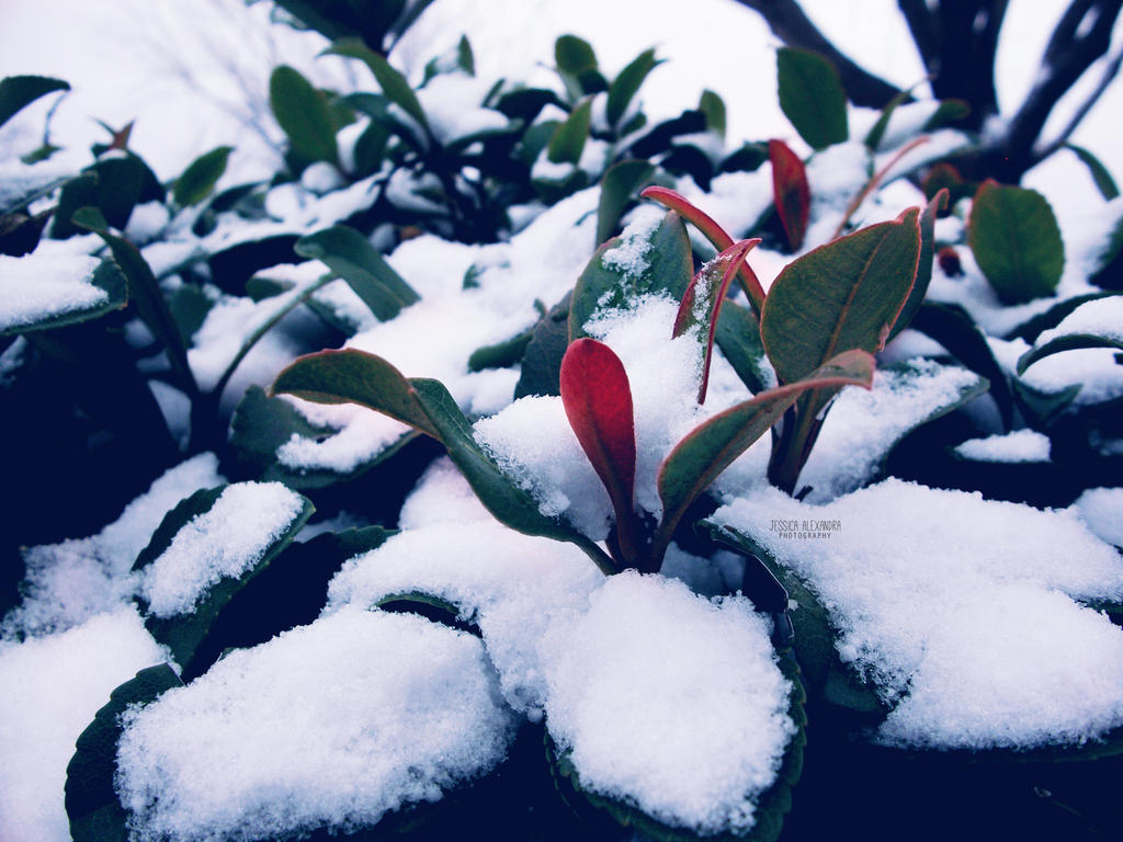 January Snow: Day 15 by Bickhamsarah