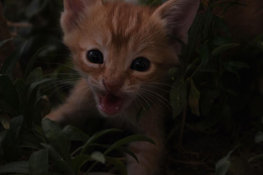 Cat by JUguLAR8Vein