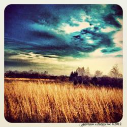 Field by Snjeskaa