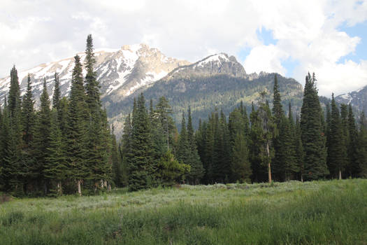 Field 18