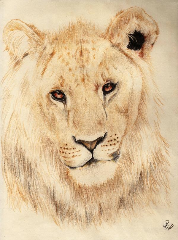 liony by esponja