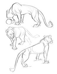 Lioness Sketches