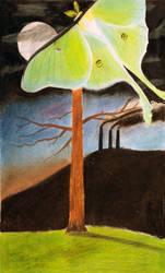Moth by paterick16kermit
