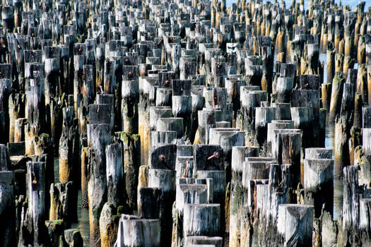 Wood Pilings in the Hudson River