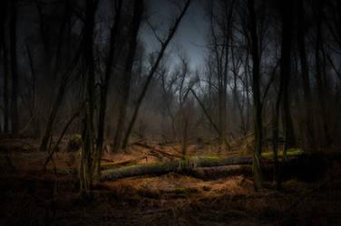 Dead Forest No. I by IngoKlughardt