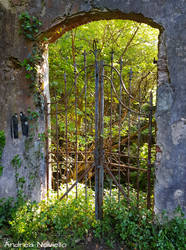 Gate in the forest by NdrN