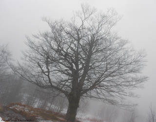 Tree in the mist (Reupload) by NdrN