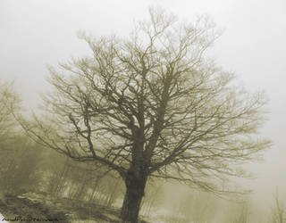 Tree in the mist - Sepia version by NdrN