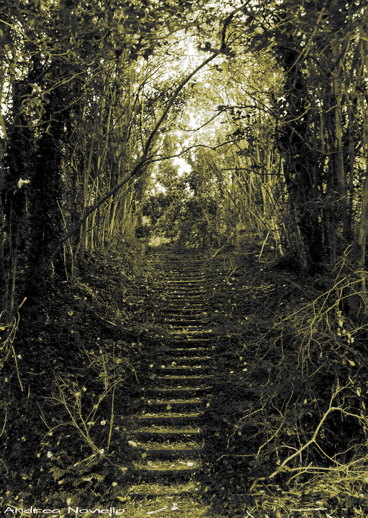 Stairway in the forest - Sepia version by NdrN