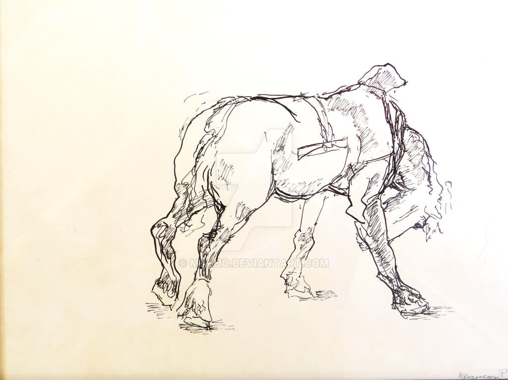 Horse by mabho