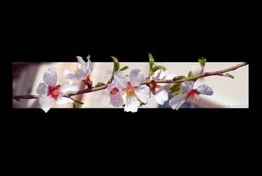 almond print by poseidonsimons-s