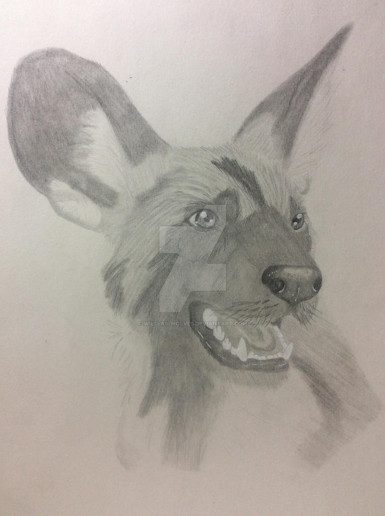 African Wild Dog by Wild-As-Wolves