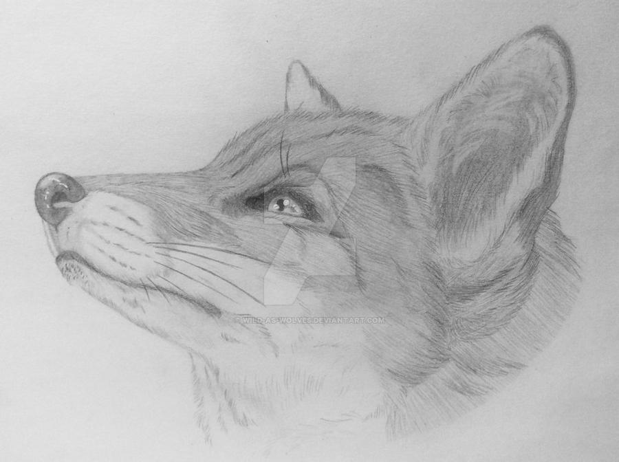 Fox by Wild-As-Wolves