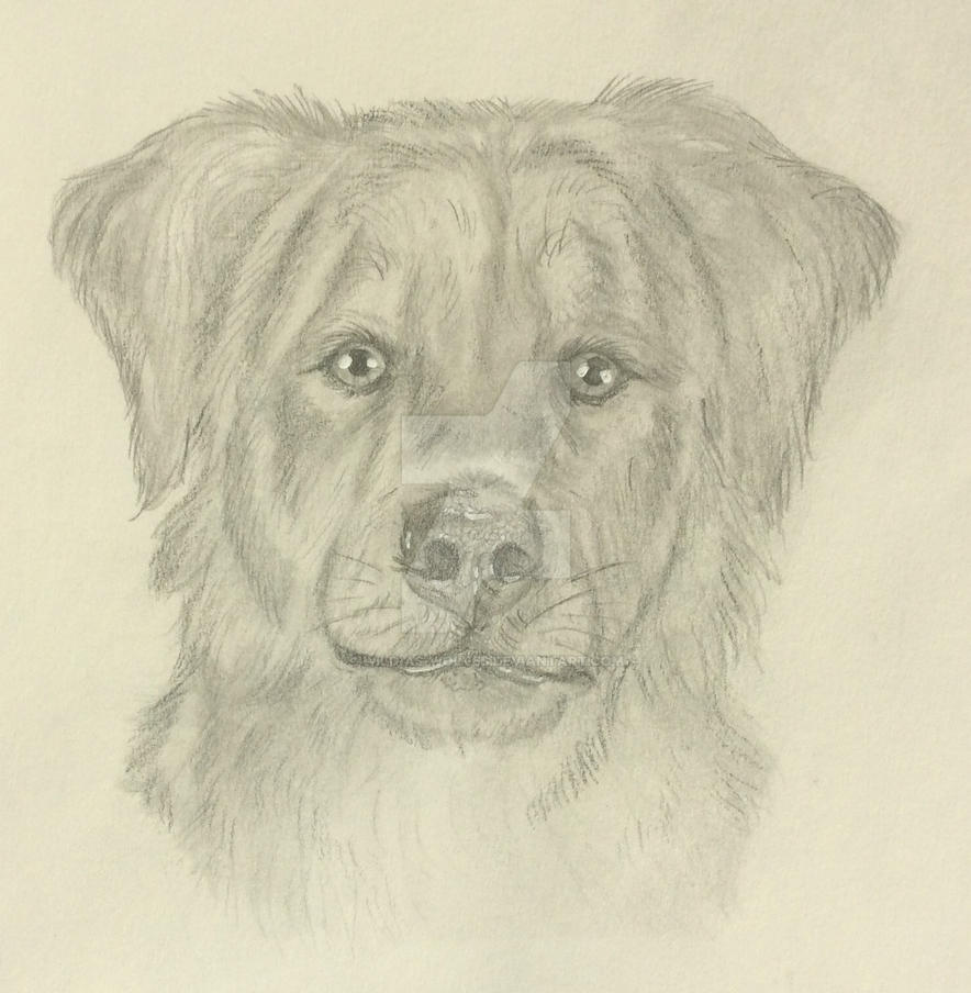 Dog Sketch by Wild-As-Wolves