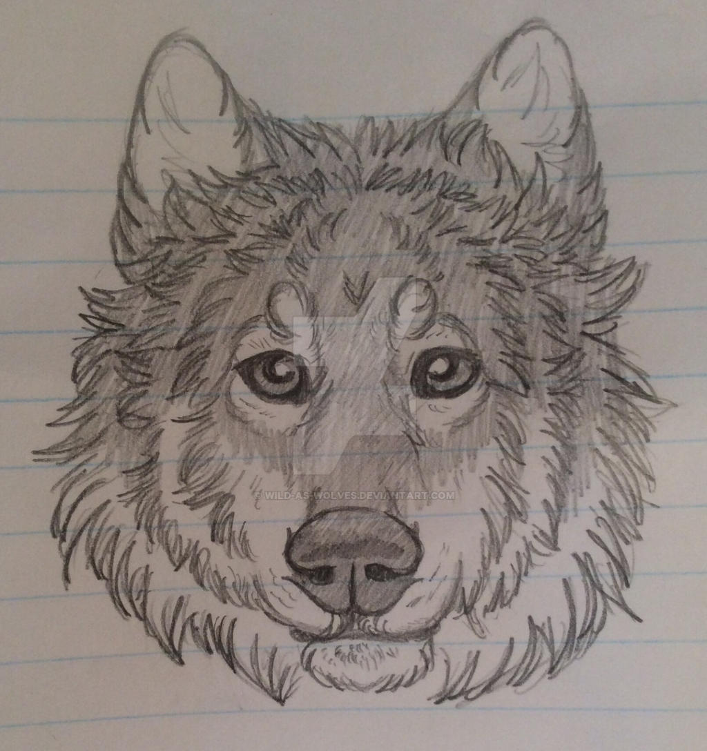 Wolf Doodle by Wild-As-Wolves