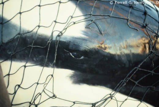 help free lolita she needs help EXTREMELY bad
