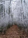Frozen Way by Freak-of-Noize