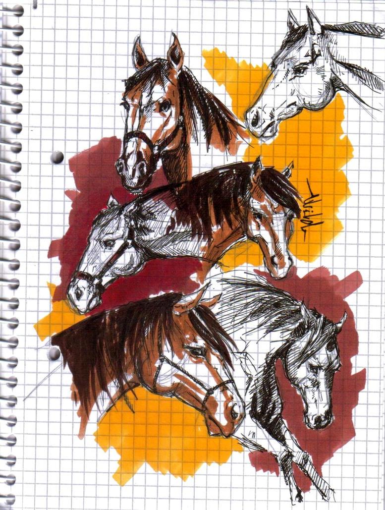 Quarter horse head practise by anne-wild