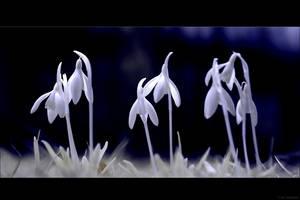 new-born-spring by blackdaddy