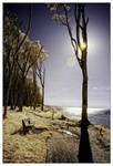 sunlight tree