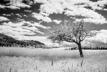 Landscape 2012-I