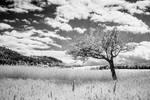 Landscape 2012-I by blackdaddy
