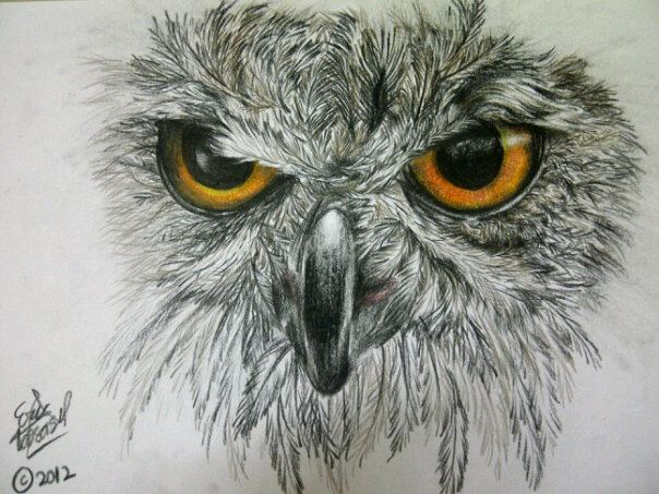 Owl Eyes Drawing Wwwimgarcadecom Online Image Arcade