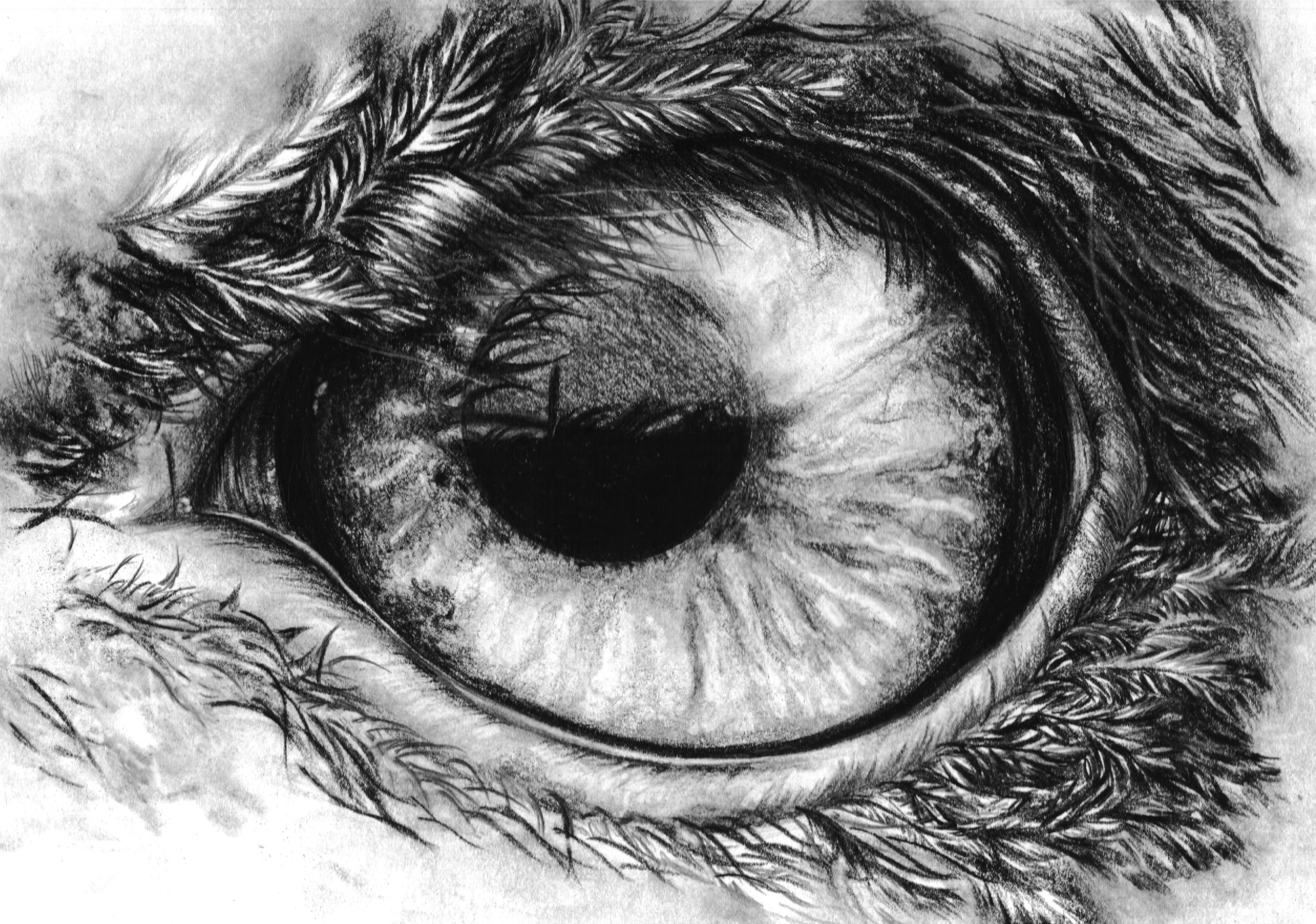 Cool Sketches Of Animal Eyes Best Cars 2018