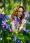 Bluebell Wonderland