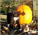 November Kitten