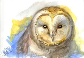 Owl of the Water by Dari-Dari