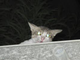 CAT.. hidding from meh.. by Anonymous00Admirer