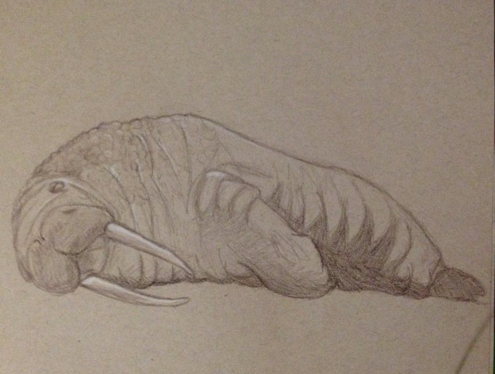 Walrus sketch by GaymerJosh