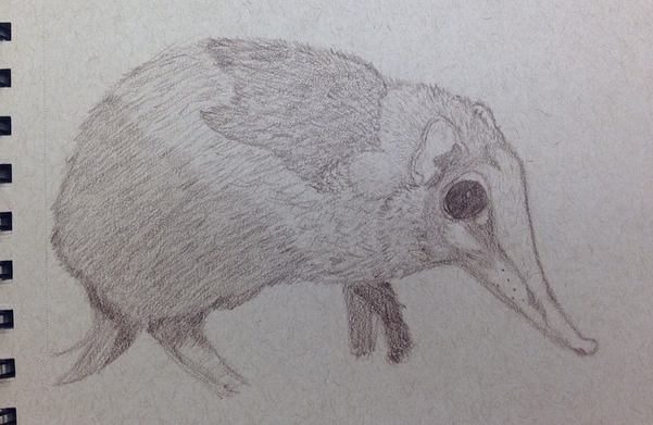 Elephant shrew sketch by GaymerJosh