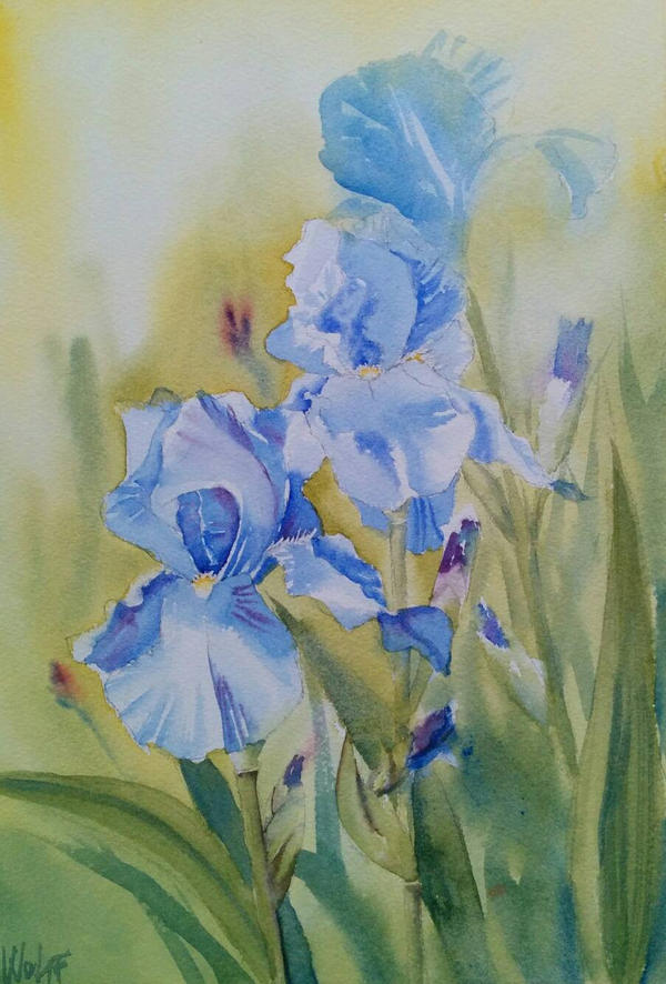 Blue Irises by MagdalenaWolff