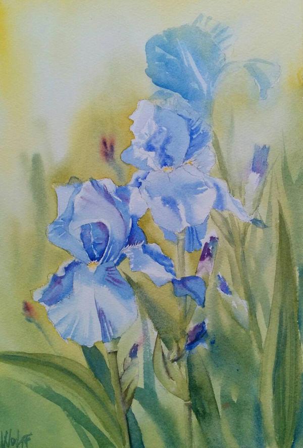 Blue Irises by MagdalenaWolff