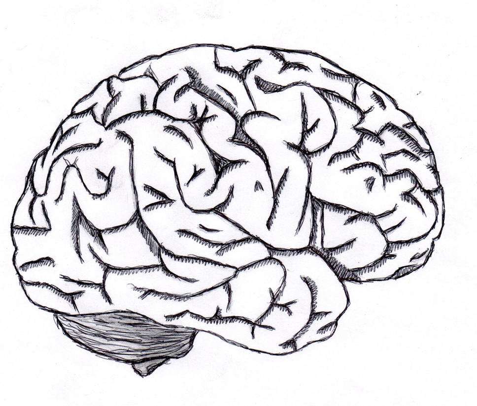 brain sketch by neverenderdesign on deviantart Brain Outline Icon Brain Outline Cliparts Frontal View